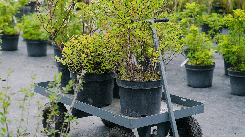 chariot de plante