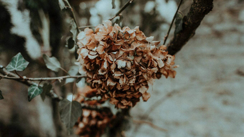 fleurs mourantes