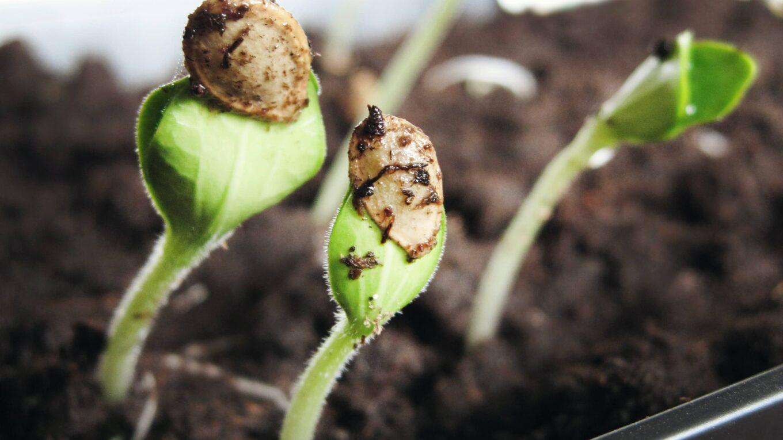boutures plantes